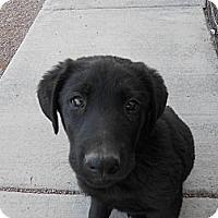 Adopt A Pet :: Gambler - Arenas Valley, NM