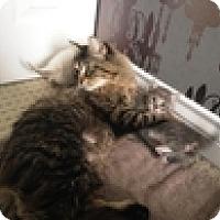 Adopt A Pet :: Valeria - Vancouver, BC