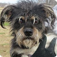 Adopt A Pet :: Austin - Westport, CT