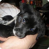 Adopt A Pet :: Bobby - Gainesville, FL