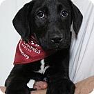 Adopt A Pet :: BL - Pup5