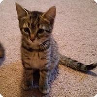 Adopt A Pet :: Cayenne - Raritan, NJ