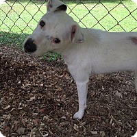 Adopt A Pet :: Bumble - Baton Rouge, LA