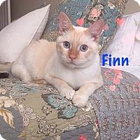 Adopt A Pet :: Finn - Foothill Ranch, CA