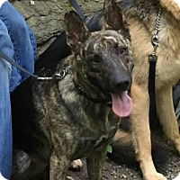 Adopt A Pet :: Luna - Rexford, NY