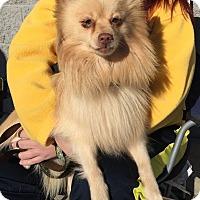 Adopt A Pet :: Charlie - Trenton, NJ