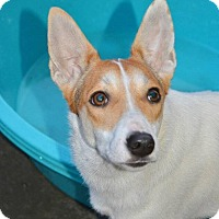 Adopt A Pet :: Affa - Morristown, NJ