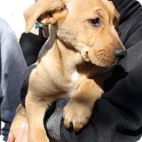 Adopt A Pet :: Dayton Pup - Columbus - Adopted! - San Diego, CA