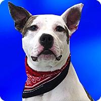 Adopt A Pet :: Roland - Cincinnati, OH