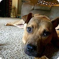Adopt A Pet :: Livy - Sanford, NC