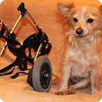 Adopt A Pet :: Scooter - Modesto, CA