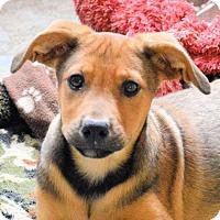 Shepherd (Unknown Type) Mix Dog for adoption in Von Ormy, Texas - Polly