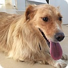 Adopt A Pet :: Breagha