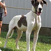 Adopt A Pet :: Grover - Baden, PA