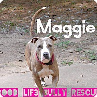 Adopt A Pet :: Maggie May - Tomball, TX