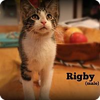 Adopt A Pet :: Rigby - Glen Mills, PA
