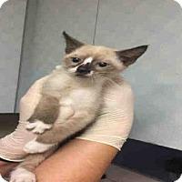 Adopt A Pet :: NOODLE - Jacksonville, FL