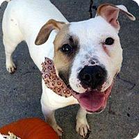 Adopt A Pet :: PENELOPE - Philadelphia, PA