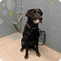Adopt A Pet :: A5016725 is at Lancaster - Beverly Hills, CA