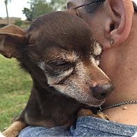 Adopt A Pet :: Taco - New Smyrna Beach, FL