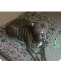 Adopt A Pet :: Fresh~COURTESY POST~ - Columbus, OH