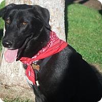 Adopt A Pet :: Star - Redding, CA