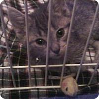 Adopt A Pet :: Daphne - Sister of Dooley - Island Park, NY