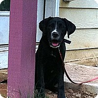 Adopt A Pet :: Bailey - Cumming, GA