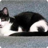 Adopt A Pet :: Tessie - Alexandria, VA