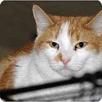 Adopt A Pet :: Patch - Monroe, GA