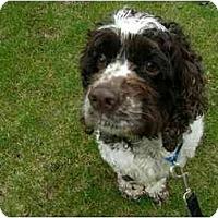 Adopt A Pet :: Tedi - Tacoma, WA