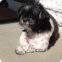 Adopt A Pet :: Scooter - Wilmington, DE