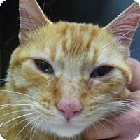 Adopt A Pet :: Frisco - Springdale, AR