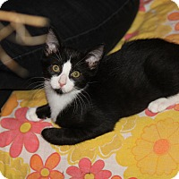 Adopt A Pet :: Stuart (adoption pending) - Richmond, VA