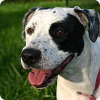 Adopt A Pet :: Dotty - Flushing, MI