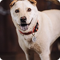 Adopt A Pet :: Audrey - Portland, OR
