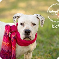 Adopt A Pet :: Kate - Pearland, TX