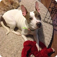 Adopt A Pet :: PENNY - Rancho Cucamonga, CA