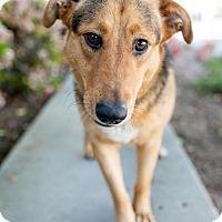 Adopt A Pet :: Biscotti - San Diego, CA
