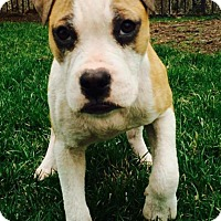 Adopt A Pet :: Fred - Dayton, OH