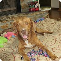 Adopt A Pet :: CLAY - Jacksonville, FL