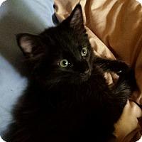 Adopt A Pet :: Canton - Colorado Springs, CO