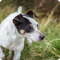 Adopt A Pet :: Annabelle - Berkeley, CA