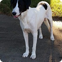 Border Collie Mix Dog for adoption in Colmar, Pennsylvania - Tori