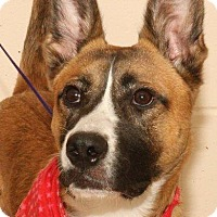 Shepherd (Unknown Type) Mix Dog for adoption in McDonough, Georgia - P-Shep