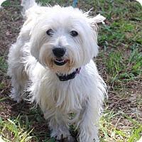 Adopt A Pet :: Buffy and Will - Brownsboro, AL
