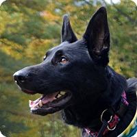 Adopt A Pet :: Sassy - New Ringgold, PA