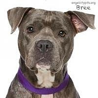 Adopt A Pet :: BREE - LOS ANGELES, CA