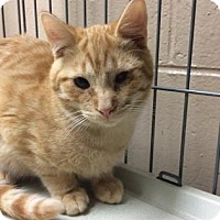 Adopt A Pet :: Bonzai - Chicago Heights, IL
