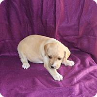 Adopt A Pet :: Gabby - Huntsville, AL